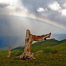 End of the Rainbow by Stevej46