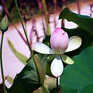 Lotus Bud by Mattie Bryant