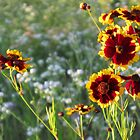 Wildflowers in the Meadow by teresa731
