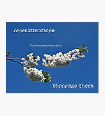 Banner für blühende Bäume Fotodruck