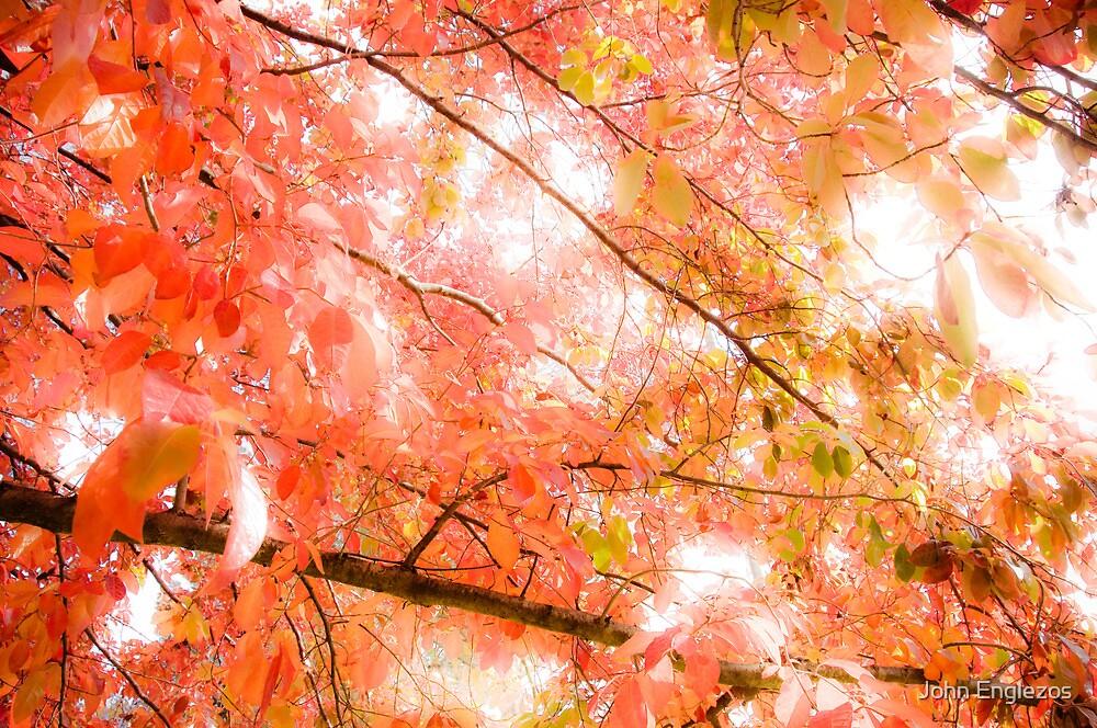 Autumn by John Englezos
