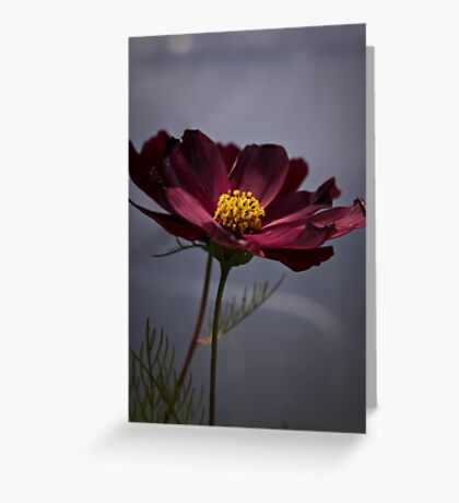 Calm afternoon. Greeting Card