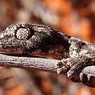 """""""Western Spiny Tailed Gecko"""" Shark Bay, Western Australia by wildimagenation"""