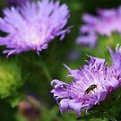 P_66-683 Visiting Purple by Michael McCasland