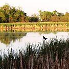 Pond Sentinel by kenspics