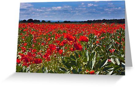 Poppy Field  by Trevor Kersley