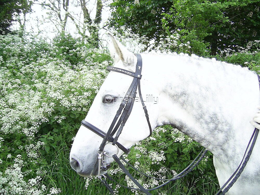 Stunning Hanoverian by OpheliaLilly