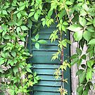 From The Garden...Vine Covered Shutter by Sharon A. Henson