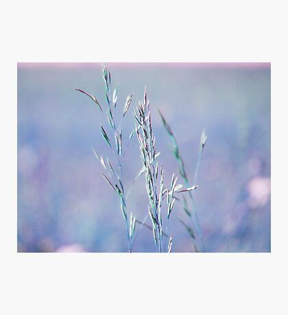 summer grass 18 Photographic Print