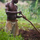 Gulu Farmer by linelight