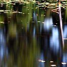 Pond Reflections by David Piszczek