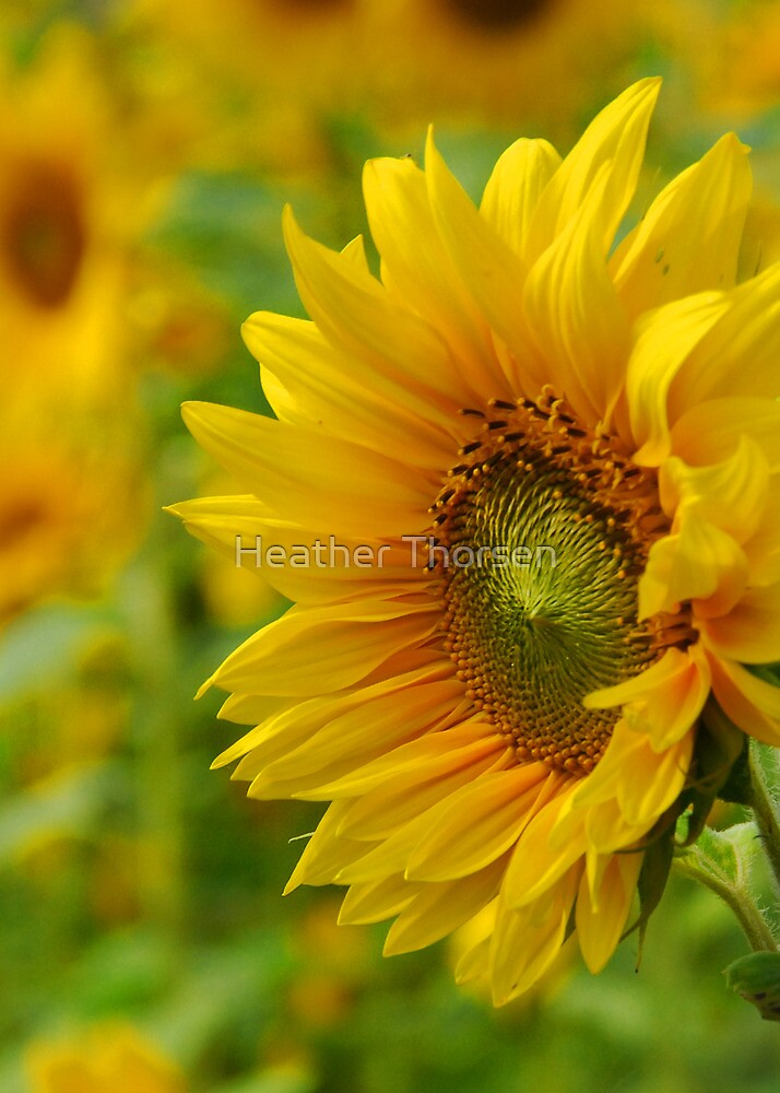 Let there be sunshine by Heather Thorsen