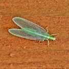 Long Green Bug by Larry Trupp
