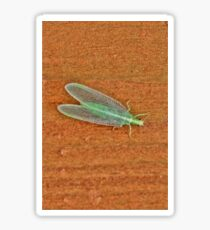 Long Green Bug Sticker