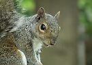 Squirrel 2 by Peter Barrett