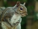Squirrel 3 by Peter Barrett