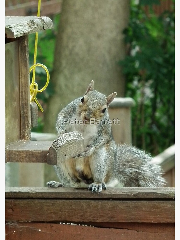 Squirrel 4 - please sir can I have some more? by hartrockets