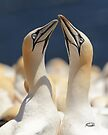 Mating Ritual by Todd Weeks