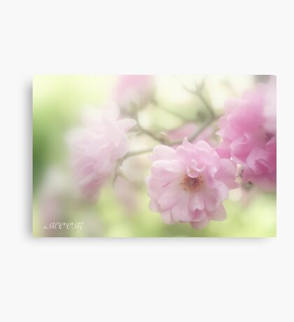 Rose collection 6 Canvas Print