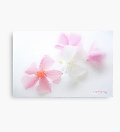 Oleander 1 Canvas Print