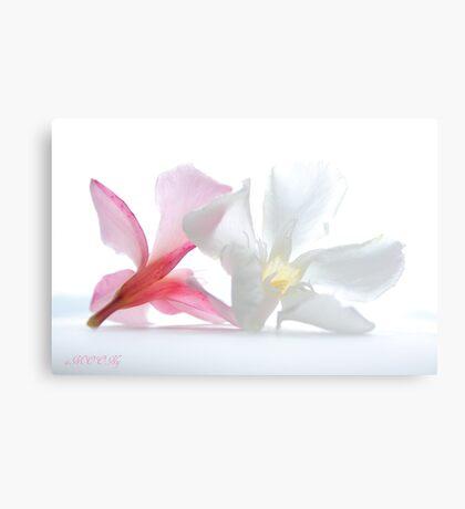 Oleander 2 Canvas Print