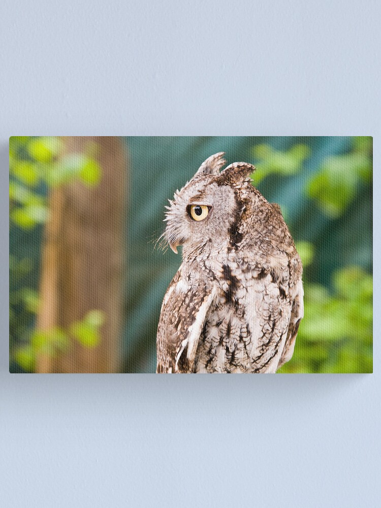 Alternate view of Screech  Owl Canvas Print