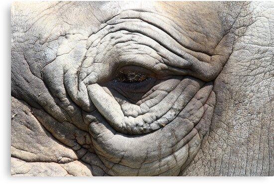 rhino eye - port lympne zoo by ClaireTiltman
