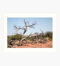 Desert tree in Utah Art Print