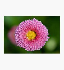 Pink & Yellow Flower Photographic Print