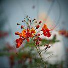 Flower by laurentlesax