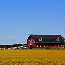 Stylish Red Barn by Larry Trupp