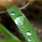 Dewy Grass by Stacy Griebel