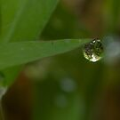 World In a Drop by Stacy Griebel