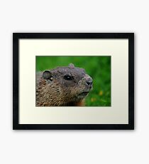 Woodchuck Profile Framed Print