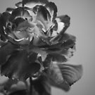 Variegated Black and White by Sunshinesmile83