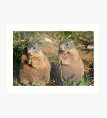 Marmots Art Print