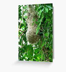 Weaver Bird nest Greeting Card