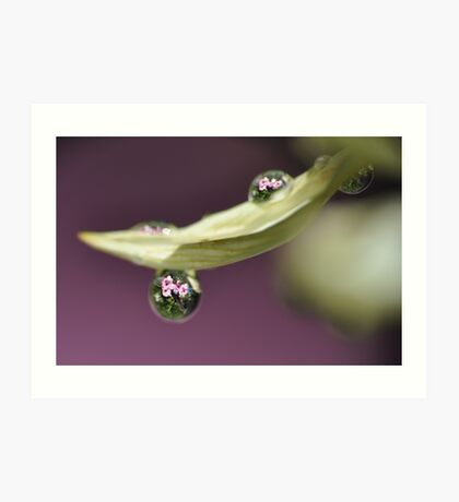 A Drop Of Nature  Art Print