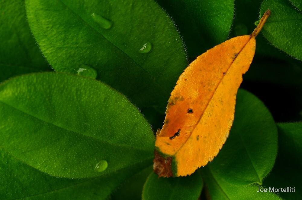 Green and Gold by Joe Mortelliti