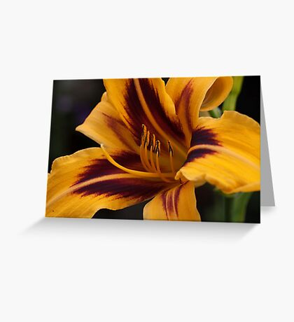 Today's Lily Greeting Card