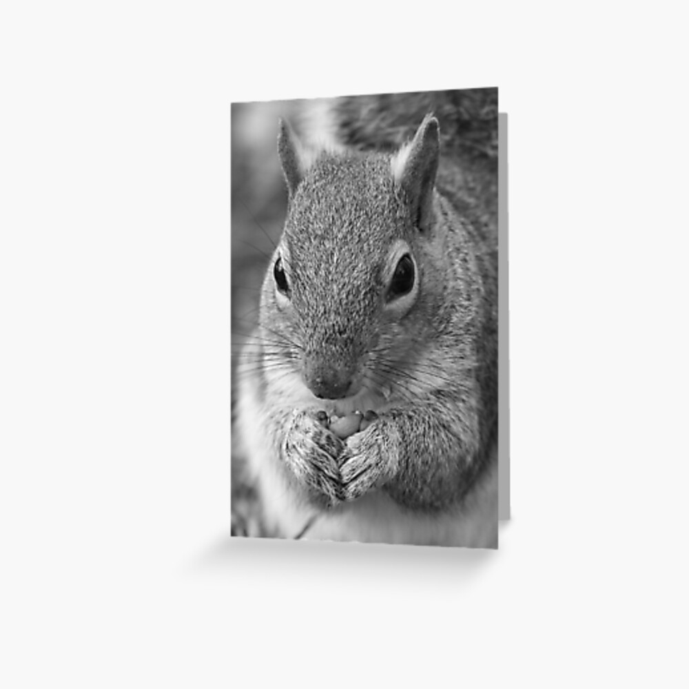 Squirrel 5 - Black and White Portrait Greeting Card