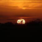 Golden Sunset by Peter Barrett