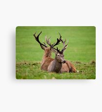 Still Not Talking To Me eh.....? Canvas Print