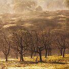 Orchard in Winter Fog, Cradoc, Tasmania #2 by Chris Cobern