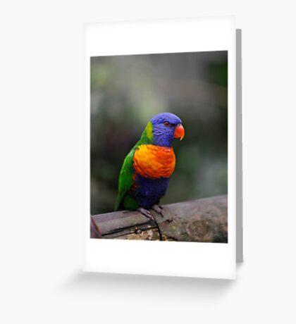 Lorikeet - Kuranda birdworld. Greeting Card