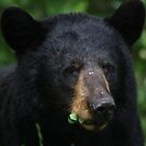 Black Bear by panthrcat