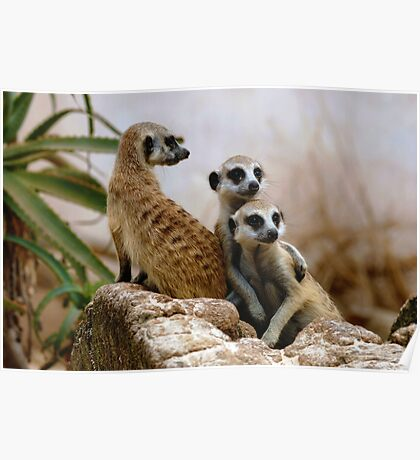 Meercat Family Poster