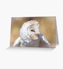 Head Of White Barn Owl Greeting Card
