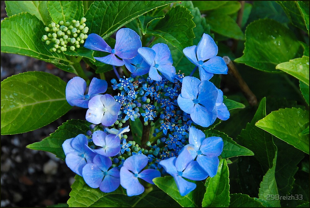 A touch of blue in my garden by 29Breizh33