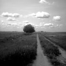The Wagon Trail by Rhonda Blais